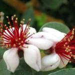 Экзотические растения.